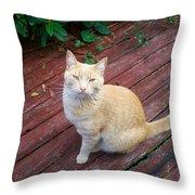 Orange Tabby On Porch Throw Pillow