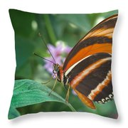 Orange Tiger Or Banded Orange Butterfly Throw Pillow
