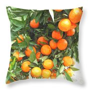 Orange Trees With Fruits On Plantation Throw Pillow