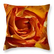 Orange Variegated Rose Throw Pillow