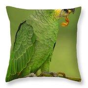 Orange-winged Parrot Amazonian Ecuador Throw Pillow