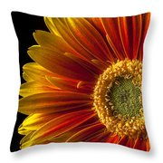 Orange Yellow Mum Close Up Throw Pillow