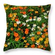 Orange Yellow White Daisies Throw Pillow