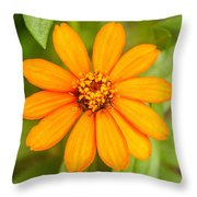 Orange Zenia Throw Pillow