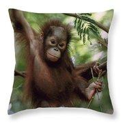 Orangutan Infant Hanging Borneo Throw Pillow by Konrad Wothe