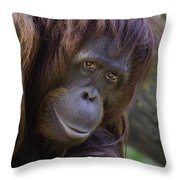 Orangutan Portrait Throw Pillow