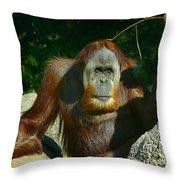 Orangutan Scratches With Stick Throw Pillow