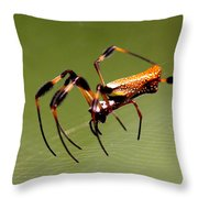 Orb Weaver - Coastal Spider Throw Pillow