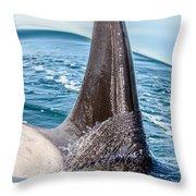 Orca Apex II Throw Pillow