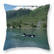 Orca Female Inside Passage Alaska Throw Pillow