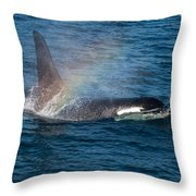 Orca Whale Surfacing Throw Pillow