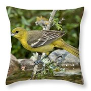 Orchard Oriole Female Throw Pillow