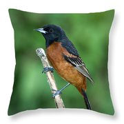 Orchard Oriole Icterus Spurius Adult Throw Pillow
