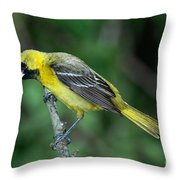 Orchard Oriole Icterus Spurius Juvenile Throw Pillow