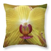 Orchid 141 Throw Pillow