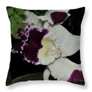 orchid 220 Cattleya Moscombe 'The King'  2 of 3 Throw Pillow