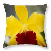 Orchid Beauty - Cattleya - Pot Little Toshie Mini Flares Mericlone Hawaii Throw Pillow by Sharon Mau