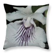Orchid Cochleanthes Aromatica  Menehune Throw Pillow
