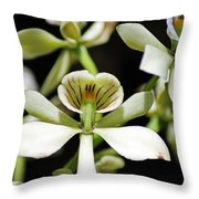 Orchid Encyclia Fragrans Throw Pillow