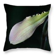 Orchid Petal Throw Pillow