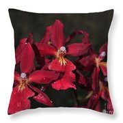 Orchid Red Burrageara Living Fire  Glowing Ember Throw Pillow