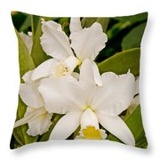 Orchid Sophronitis Throw Pillow