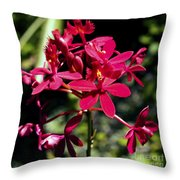Orchid Study V Throw Pillow