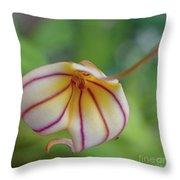 Orchids - Masdevallia Hybrid Throw Pillow