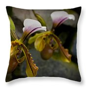 Orchids Pictures 30 Throw Pillow