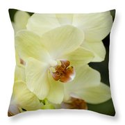 Orchids Pictures 34 Throw Pillow