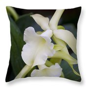 Orchids Pictures 53 Throw Pillow