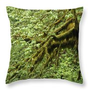 Oregon Tree Throw Pillow