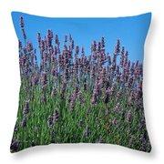 Organic Lavender Throw Pillow
