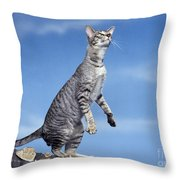 Oriental Cat Throw Pillow