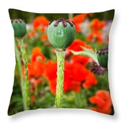 Oriental Poppy Seed Pod Throw Pillow