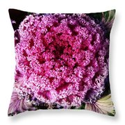 Ornamental Cabbage Plant Throw Pillow