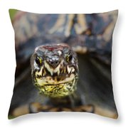 Box Turtle Close-up Throw Pillow