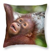 Orphan Baby Orangutan Throw Pillow