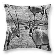 Oryx Black And White Throw Pillow