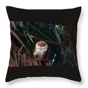 Oscar The Barn Owl Throw Pillow