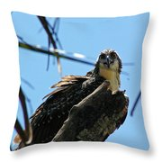 Osprey 1 Throw Pillow