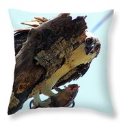 Osprey 3 Throw Pillow
