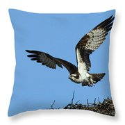 Osprey 9 Throw Pillow