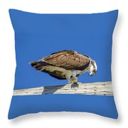 Osprey Eating Lunch Throw Pillow