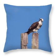 Osprey Giving Warning Throw Pillow