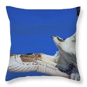 Osprey Grace And Beauty Throw Pillow