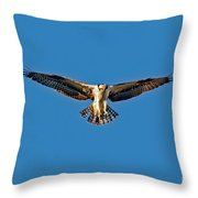 Osprey Hovering Throw Pillow