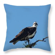 Osprey In A Tree Throw Pillow