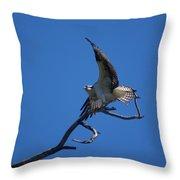 Osprey In Flight 2 Throw Pillow