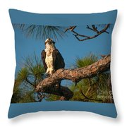 Osprey In Pine 1 Throw Pillow